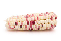 Colorful corn Royalty Free Stock Images