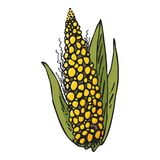 Colorful corn ear on white background royalty free illustration