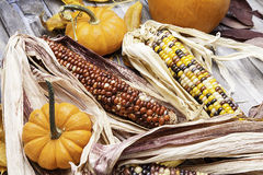 Colorful Corn with Pumpkin Stock Image