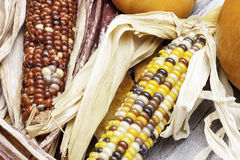 Colorful Corn Royalty Free Stock Photo