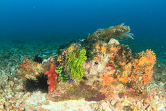 Colorful corral reef Stock Images