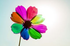 Colorful Cosmos  Stock Photos