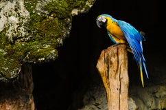 Colorful couple macaws on log,colorful in Nature Stock Photos