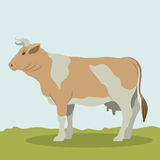 Colorful cow animal design. Cow icon. Livestock animal life nature and fauna theme. Colorful design. Vector illustration Royalty Free Stock Photography