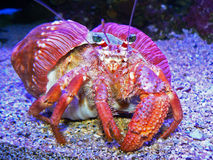 Colorful Crab Royalty Free Stock Photo