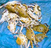 Colorful crabs on the blue sheet