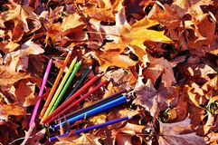 Colorful crayons among the autumn leaves. Stock Photography