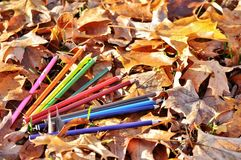 Colorful crayons among the autumn leaves. Stock Images