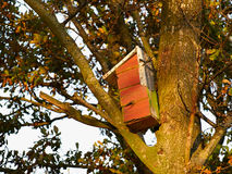 Colorful creative nesting box Royalty Free Stock Images