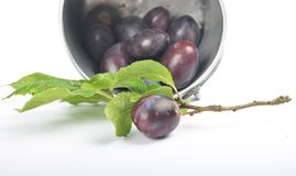 Plums with twig and leaves out of tin bucket Stock Photo