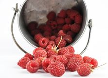 Raspberries and tin bucket on white. Colorful and crisp image of raspberries and tin bucket on white Stock Image