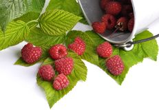 Red raspberries with tin bucket and leaves on white. Colorful and crisp image of red raspberries with tin bucket and leaves on white Royalty Free Stock Images