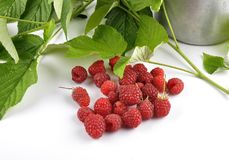 Red raspberries with tin bucket and leaves on white. Colorful and crisp image of red raspberries with tin bucket and leaves on white Stock Image