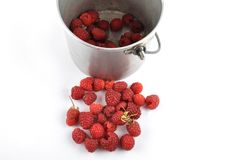 Red raspberries with tin bucket on white. Colorful and crisp image of red raspberries with tin bucket on white Royalty Free Stock Image