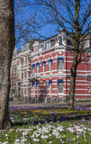Colorful crocusses in a historical street in Groningen Stock Images