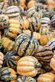 Colorful cucurbita pepo, pumpkins for autumn decoration or soup. Colorful cucurbita pepo, little pumpkins for autumn decoration or soup stock image