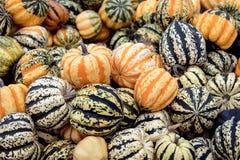 Colorful cucurbita pepo, vegetable gourds for soups or microwave. Colorful cucurbita pepo, vegetable gourds or pumpkins for soups or microwave stock photos