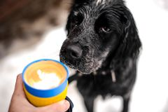 Colorful cup of hot coffee near the the dogs face Stock Photo