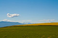 Colorful curved field with blue sky and clouds in spring Royalty Free Stock Photo
