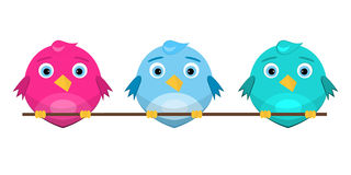 Colorful cute birds sitting on a branch Royalty Free Stock Images
