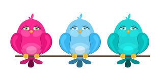 Colorful cute birds sitting on a branch Royalty Free Stock Photo