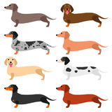 Colorful Dachshund set Royalty Free Stock Photography