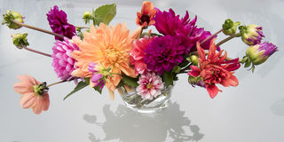 Colorful dahlias. Different beautiful pink and orange dahlias royalty free stock photography