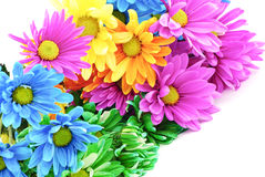 Colorful Daisies Stock Images