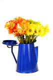 Colorful daisies in a coffe pot. Colorful daisies in a blue antique coffee pot royalty free stock photo