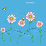 Colorful DAISIES meadow with bees background. Isolated over white background and groups, vector illustration Royalty Free Stock Photo