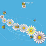 Colorful DAISIES meadow with bees background. Isolated over white background and groups, vector illustration Royalty Free Stock Photos
