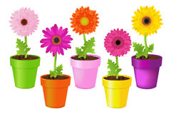 Colorful Daisies In Pots. Vector Stock Photo