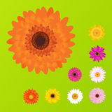 Colorful Daisies. Vector Stock Images