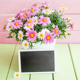 Colorful daisies in white pot Stock Photography