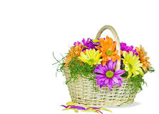 Colorful daisies in wicker basket Royalty Free Stock Photos