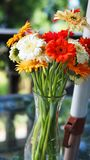 Colorful daisies in a vase royalty free stock photography