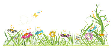 Colorful daisy field in spring time vector illustration Stock Photography