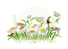 Colorful daisy field in spring time vector illustration. Background Royalty Free Stock Photo