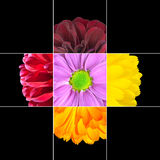 Colorful Daisy Flower mosaic design Royalty Free Stock Photos