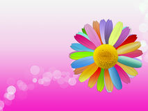 Colorful Daisy on Pink Background vector illustration