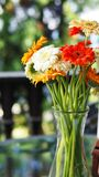 Colorful daisies in a glass with bokeh background stock images