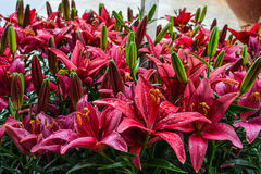 Flower gardens Royalty Free Stock Photos