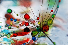 Colorful. Dandelion seed sprinkled with colors Royalty Free Stock Photo