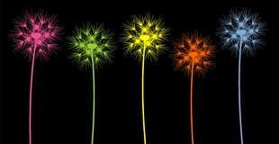Colorful dandelions Stock Photos