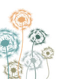 Colorful dandelions. On a white background Royalty Free Stock Photography