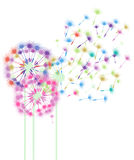 Colorful Dandelions in the Wind Stock Photos