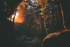 Colorful dawn in forest