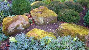 Colorful, Daylight, Garden Stock Photos
