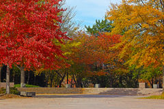 Colorful deciduous trees in park near Tidal Basin on sunny fall morning. Royalty Free Stock Photography