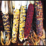 Colorful decorated corn Royalty Free Stock Images